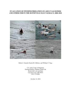 EVALUATION OF PINNIPED PREDATION ON ADULT SALMONIDS AND OTHER FISH IN THE BONNEVILLE DAM TAILRACE, Robert J. Stansell, Karrie M. Gibbons, and William T. Nagy  U.S. Army Corps of Engineers