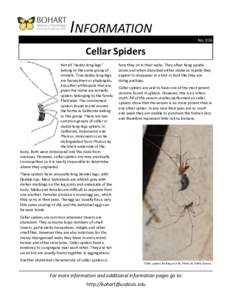 """INFORMATION No. 036 Cellar Spiders Not all """"daddy-long-legs"""" belong to the same group of"""