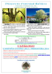 Tilia idmarch document search engine for Proyecto vivero forestal pdf