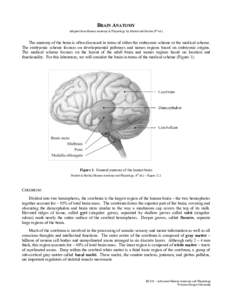 BRAIN ANATOMY Adapted from Human Anatomy & Physiology by Marieb and Hoehn (9th ed.) The anatomy of the brain is often discussed in terms of either the embryonic scheme or the medical scheme. The embryonic scheme focuses