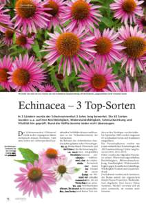 echinacea idmarch document search engine. Black Bedroom Furniture Sets. Home Design Ideas
