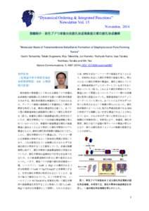 """""""Dynamical Ordering & Integrated Functions"""" Newsletter Vol. 15 November, 2014  業績紹介:黄色ブドウ球菌由来膜孔形成毒素蛋白質の膜孔形成機構"""